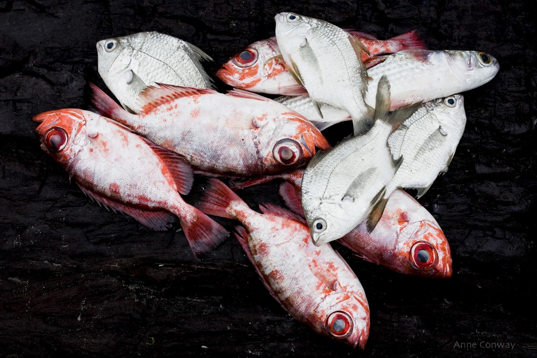 Freshly caught fish. Montego Bay, Jamaica, West Indies